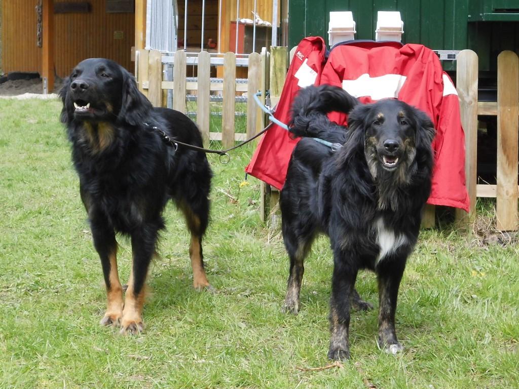 Silas und Leila