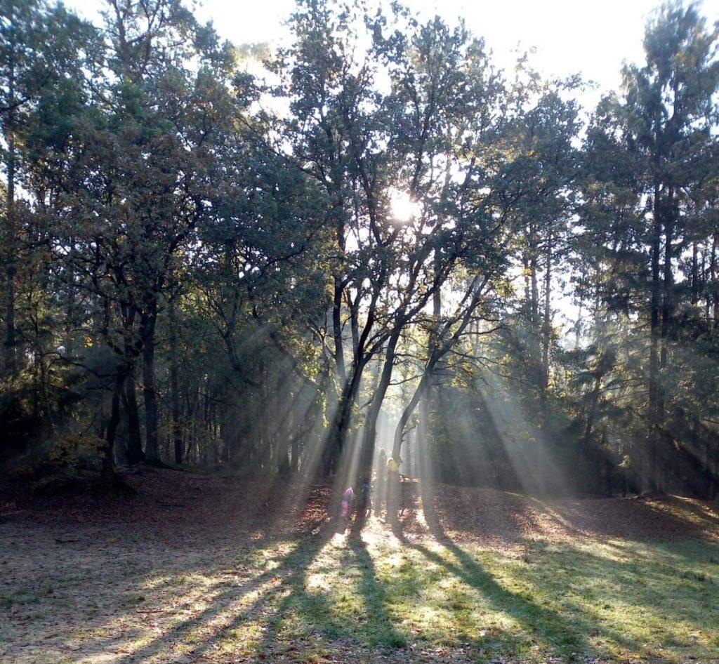 Eine Lichtung im Wald, Sonnenstrahlen fallen durch den Baum. Kinder stehen unter dem Baum und basteln Laternen.