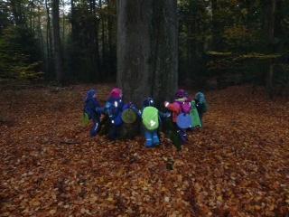Baum-umfassen